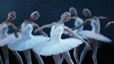 Балет Лебединое озеро в Мариинском театре. Архивное фото