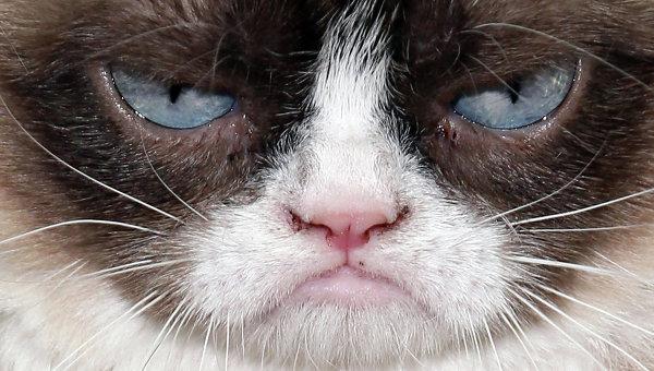 Сердитый кот (Grumpy Cat), Архивное фото