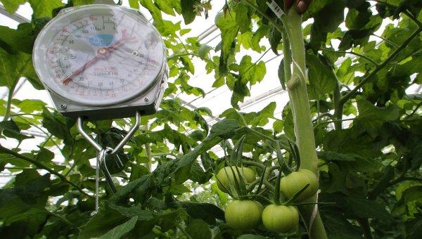 Агрохолдинг «Эко-культура» вложит 18 млрд руб. вворонежские теплицы