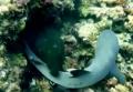 Подводная схватка не на жизнь, а на смерть: мурена побеждает акулу
