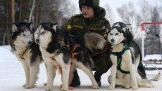 Курсант со служебными собаками породы хаски на занятиях по подготовке военных кинологов в учебном центре Западного военного округа