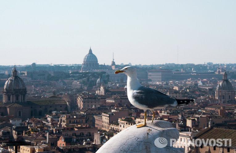 Чайка на крыше дома в Риме
