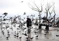 Женщина кормит голубей в Стамбуле