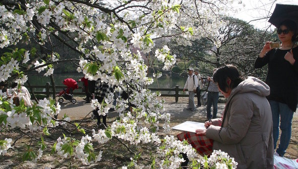 Цветение сакуры в Токио, архивное фото
