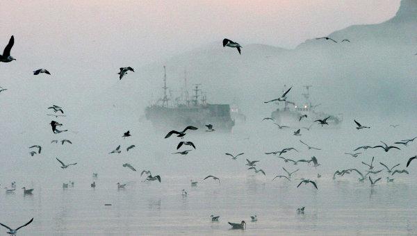 Рыболовецкие суда у берегов острова Шикотан. Архивное фото