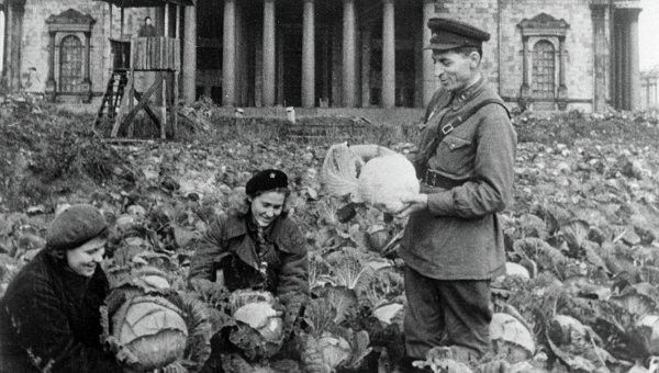 Двое советских воинов и жительница блокадного Ленинграда убирают урожай капусты на огороде у Исаакиевского собора