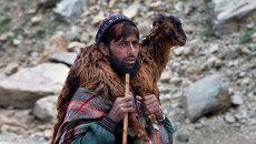 Кочевник с козленком на плечах в горах Кашмира