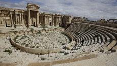 Театр в древнем оазисе города Пальмира. 2014 год