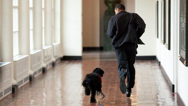 Президент США Барак Обама со своим псом Бо в Белом доме, архивное фото