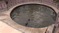 Спасатели привезли генератор в обесточенный парк в Крыму и сменили воду тюленям