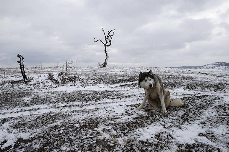 Собака сидит на поле
