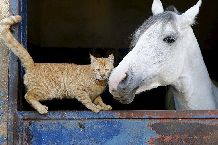 Кошка стоит возле лошади в Бейруте