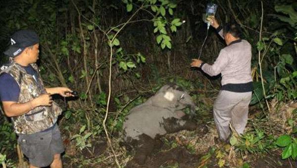 Спасатели пытаются помочь слоненку освободиться от веревочной ловушки