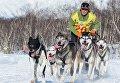 """Гонка на собачьих упряжках """"Берингия 2016"""" на Камчатке"""