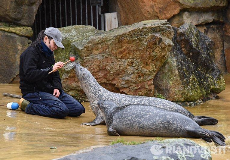 Выступление морских котиков в Зоологическом саду Берлина