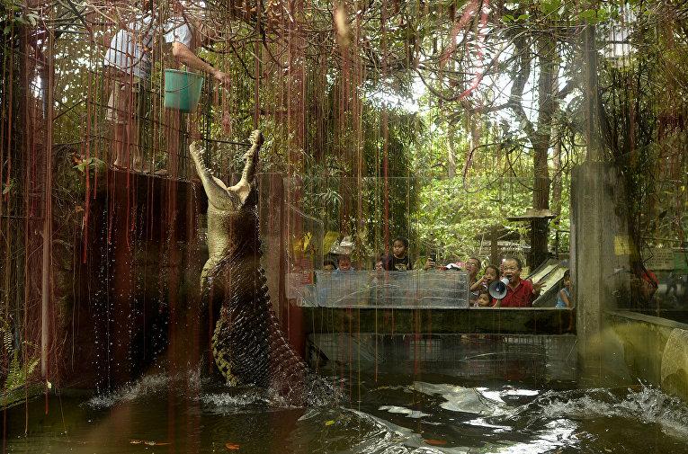Крокодил в зоопарке в Маниле