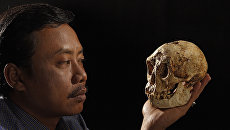 Карликовый череп найденный на острове Флорес в Индонезии