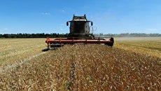 Уборка пшеницы в Ростовской области