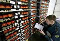 Работник таможенного поста российско-польского участка государственной границы досматривает партию помидоров
