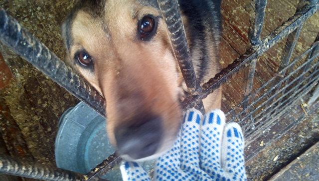 Московский приют для бездомных животных Искра