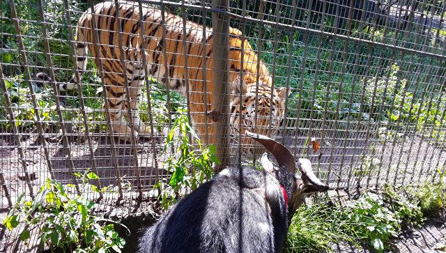 Приморский сафари-парк вошел втоп-12 наилучших зоопарков мира