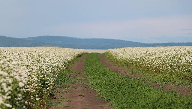 «Алтайтурцентр»: турпоток вАлтайском крае внынешнем году перевалит за2 млн.