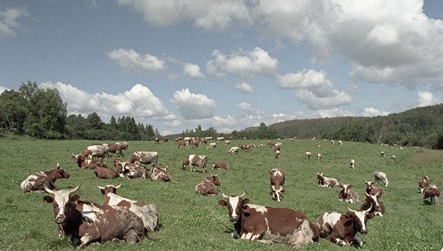 Около 440 тыс тонн молочной продукции произвели вПодмосковье заполгода