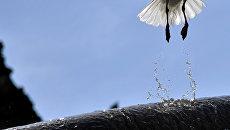Чайка вылетает из фонтана в центре Рима. Архивное фото