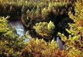 Тайга в Амурской области