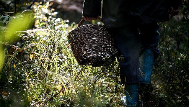 Грибник в лесу. Архивное фото