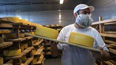 Демонстрация перекладки сыров в хранилище созревания сыра сыроварни Русский пармезан во время сырного фестиваля в Московской области