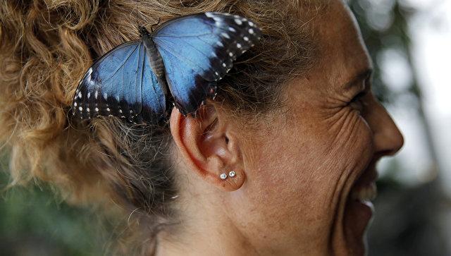 Бабочка сидит на ухе у посетительницы Аквариума Генуи. Архивное фото