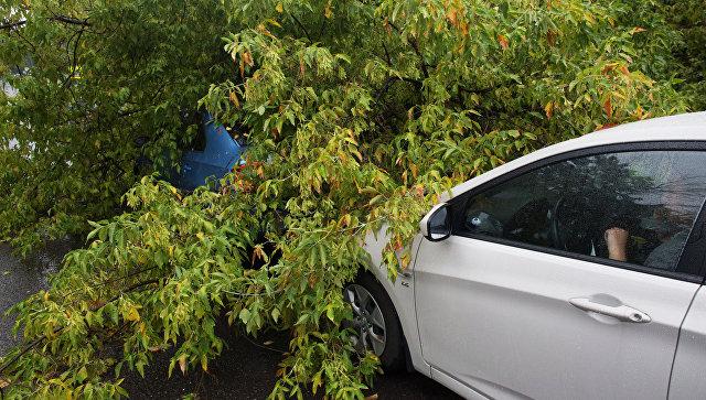 Дерево упало на 4 легковушки вцентральной части Москвы