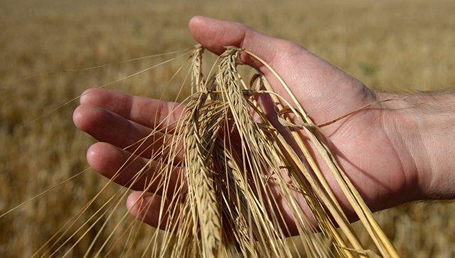 Уборка зерновых. Архивное фото