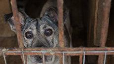 Приют для бездомных животных в Москве. Архивное фото
