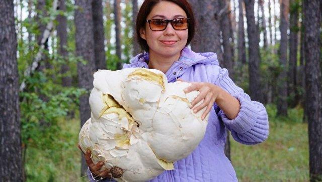 Гриб весом 5 килограммов вырос вКрасноярском крае