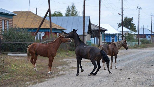 ВОЗ: Количество суицидов в русских селах значительно превосходит местные показатели