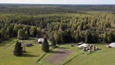 Леса Тюменской области. Архивное фото
