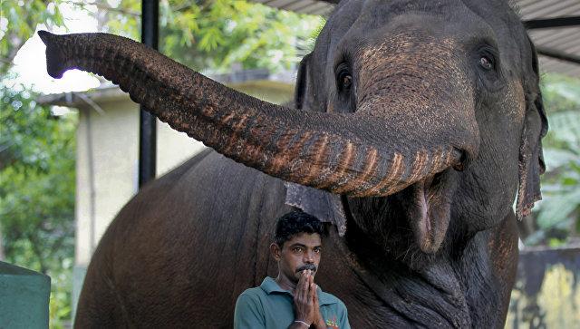 Слоны ненуждаются вбольшом количестве сна— Ученые