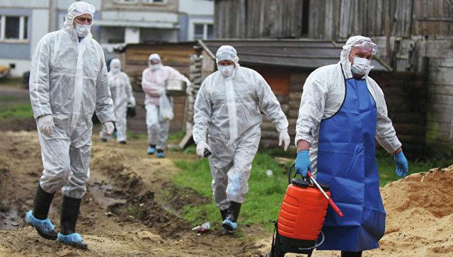 Граждан Заполярья предупредили о вероятной вспышке африканской чумы свиней