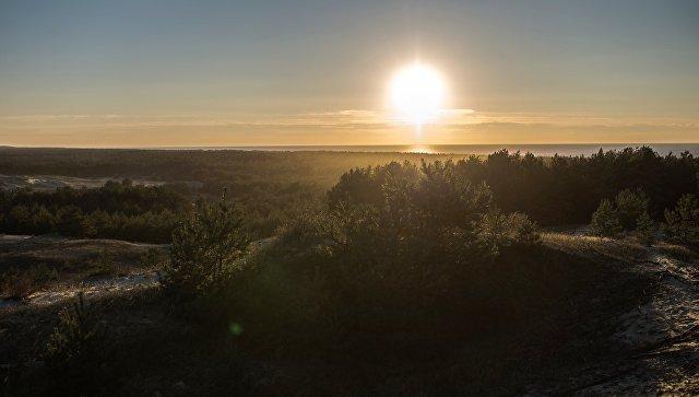 Вид со смотровой площадки на высоту Эфа в национальном парке Куршская коса. Архивное фото
