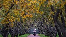Женщина гуляет по яблоневому саду в парке Коломенское в Москве. Архивное фото