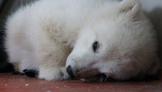 Две трети диких животных наЗемле пропадут к 2020