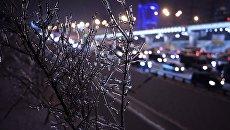 Заледеневшее дерево на одной из улиц Москвы. Архивное фото