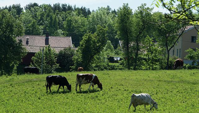 Российская Федерация запретила ввоз говядины из новейшей Зеландии