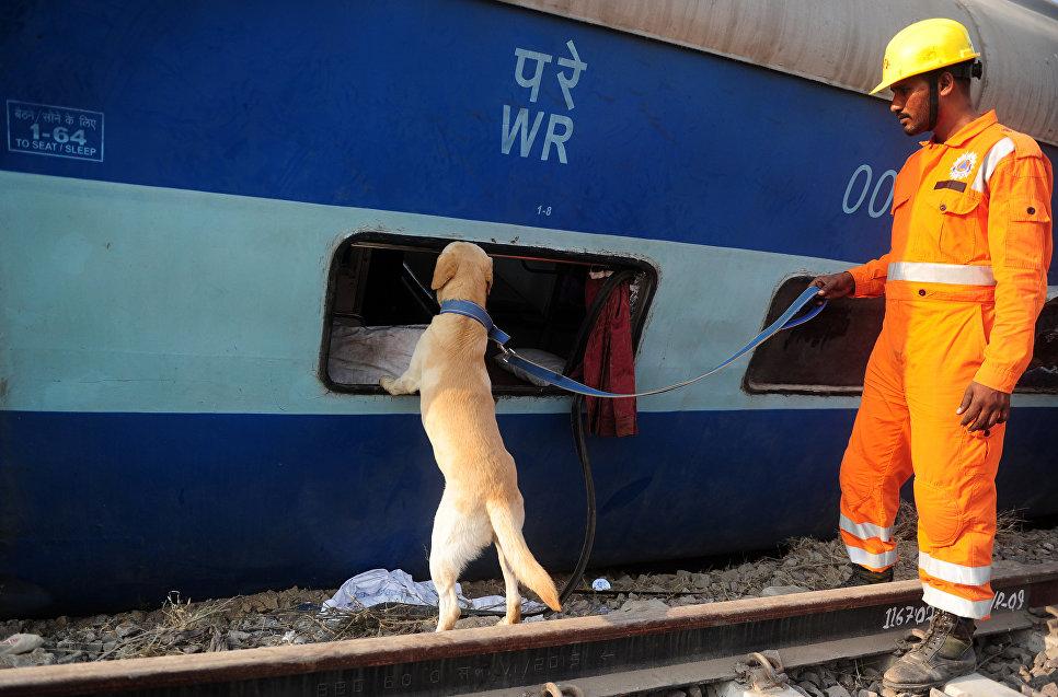 Спасатель с собакой на месте крушения поезда в штате Уттар-Прадеш, Индия.