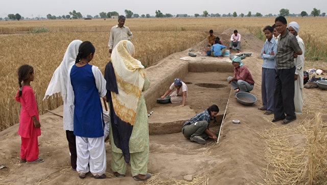 Индия оспаривает первенство Китая визобретении риса, утверждают ученые