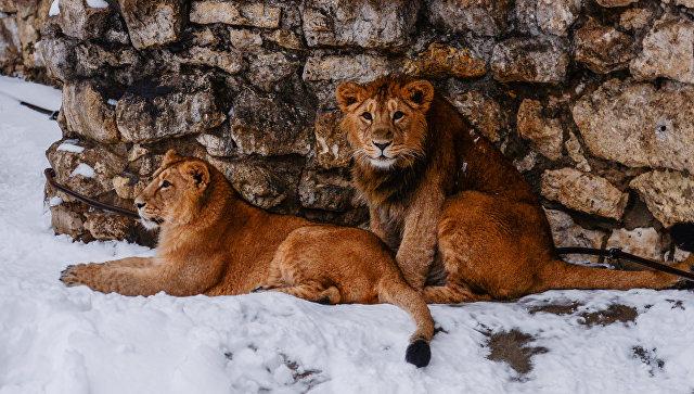 ВЮжном округе может появиться зоопарк