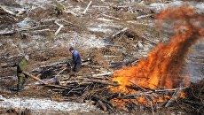 Вырубка леса под будущее водохранилище на территории строительства горно-обогатительного комбината (ГОК) Наседкино в Забайкальском крае
