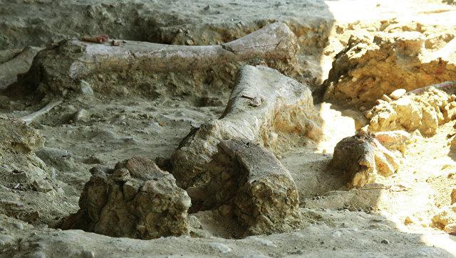 Ученые изКитая обнаружили окаменелые следы динозавров Юрского периода